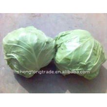 chines fresh round cabbage high quality