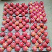 Qualidade superior do chinês fresco vermelho Qinguan Apple