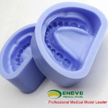 DENTAL17 (12597) Modelo de Dentadura Padrão de Borracha de Silicone para Preparação de Dentição Artificial
