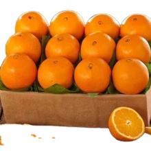 Manufacture Natural High Quality Sweet Fresh Citrus Mandarin Navel Orange