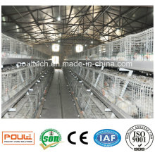 Automatic Broiler Farm Broiler Cage Poultry Farm Equipment