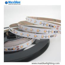 DC12V / 24V Buena calidad con precio moderado 2835 SMD LED Strip