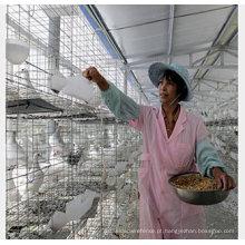 Gaiola de galinha de gaiola de pássaro de gaiola de galinha de camada galvanizada