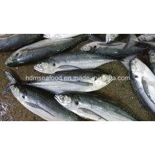 Ronda entera de mariscos congelados Hardtail Scad pescado