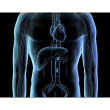 L-Arginine Flavoring Liver Care L-Arginine (CAS No: 74-79-3)