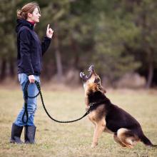 Nylon Reflective Dog Leash Pet Training Leashes