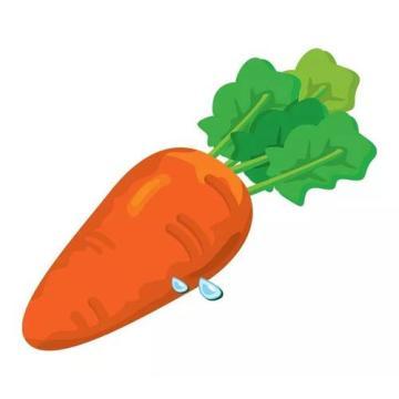 Exporter la carotte fraîche standard