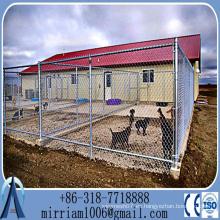 China Baochuan-- Caza de perrera de perro al por mayor / jaula de perro grande / jaula de perro 2-sala de 2 puertas