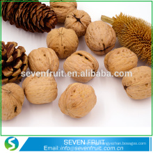 New crop common Walnuts in shell price in China,bulk walnuts in shell