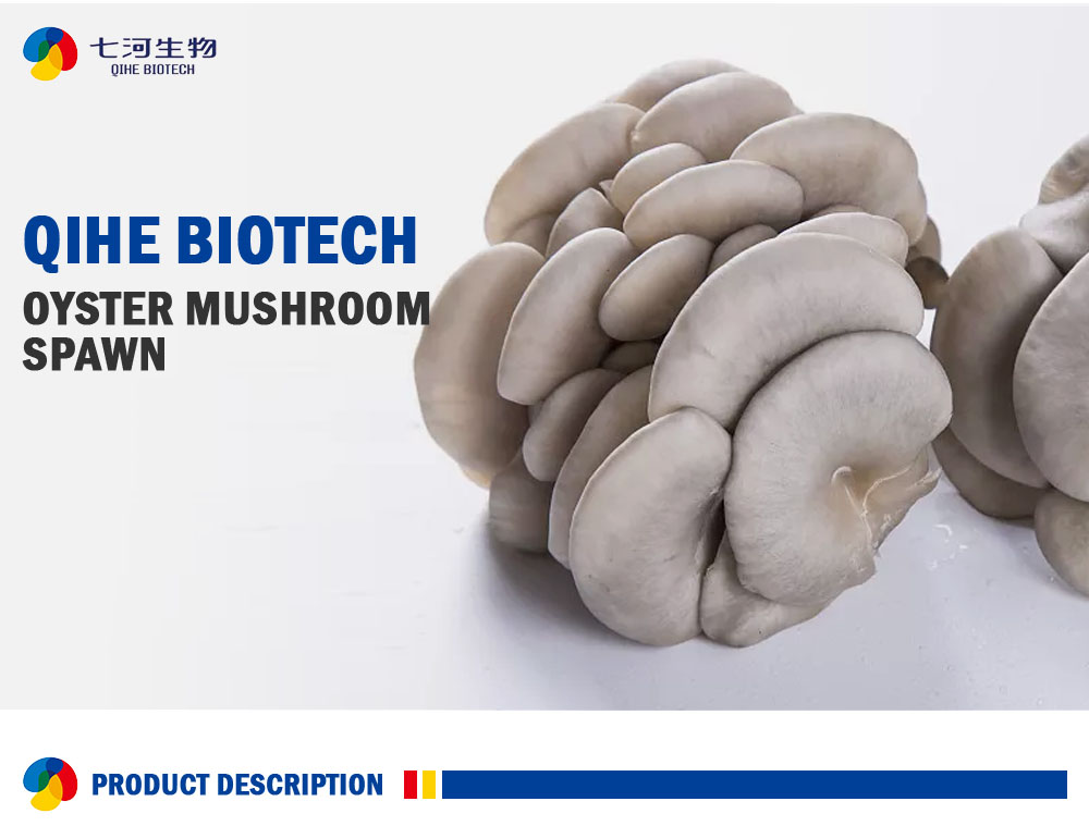 King Oyster Mushroom Substrate Additives