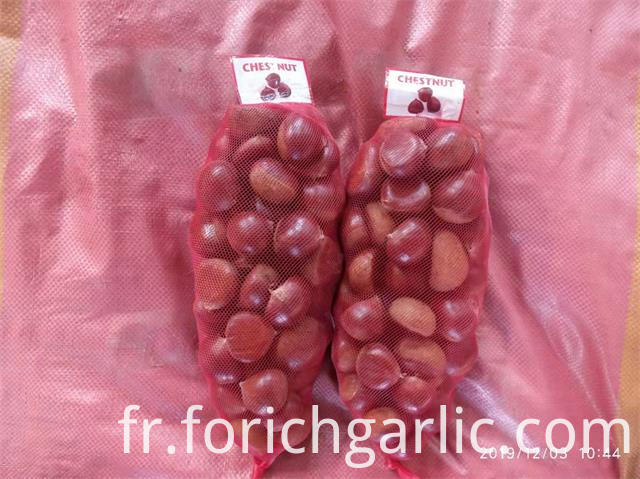 Fresh Chestnut High Quality