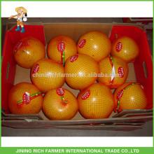 Melhor fornecedor chinês quente venda de frutas frescas mel pomelo