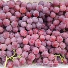 Chinese Yunnan fresh grape sweet grapes fresh grape fruit