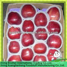 China Gansu huaniu apple