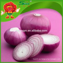 Venta al por mayor cebolla fresca / cebolla amarilla / cebolla roja exportadores de china