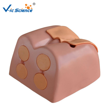 Prostata Examination Simulator Nursing Training Model