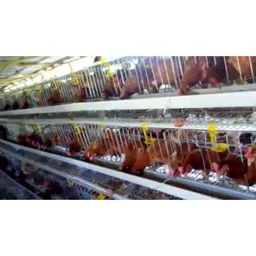 La jaula de aves de corral de los huevos del pollo de la alta calidad vende bueno en Kampala Uganda