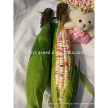 CO07 Baizi f1 híbrido roxo-branco mix sementes de milho doce ceroso