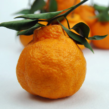 Orange Type Fresh Oranges for sell