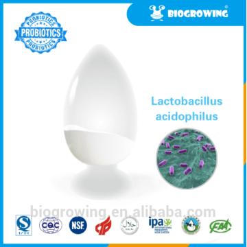 LB-G40 Lactobacillus bulgaricus