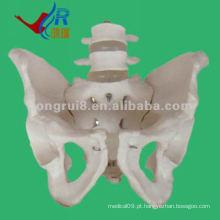 O modelo de pelvis humano mais novo com modelo de vértebra lombar 2pcs