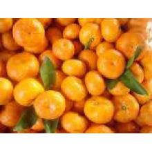 china Mandarin Orange