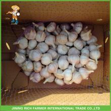 Jinxiang chinês fresco normal alho branco saco de malha 5.0cm em cartão de 10 kg