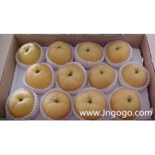 Nova exportação de culturas Boa qualidade Pera chinês Fengshui