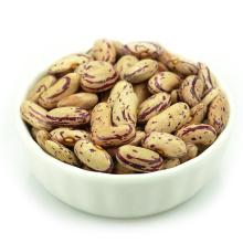 Light Specked Kidney beans tipo longo nome científico de feijão