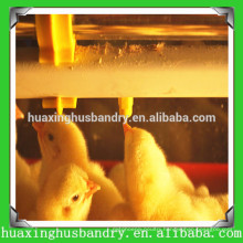 plastic poultry feeder and drinker for broiler