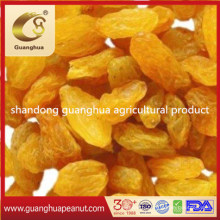Excellent Quality Gold and Jumbo Raisins
