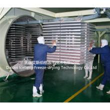Máquina secadora por congelación al vacío de condimentos