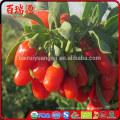 EU standard gnc de goji organic goji berry goji berry with in free samples