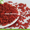 Mejore la nutrición de la vista Fruit Red Conventional Goji Berry