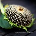 2017 nueva cosecha y semillas de girasol híbridas negras baratas de China