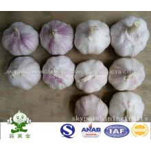 Frischer normaler weißer Knoblauch Von Jinxiang, Shandong, China