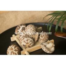 Yongxing Food 2-3cm Autumn Plant Tea Flower Mushroom