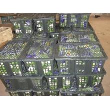 100% konkurrenzfähiger frischer Sellerie (750g)