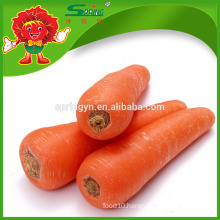 Best Supplier in Yunnan organic carrots with good quality