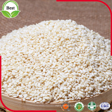 Hulled White Sesame Seed for Export