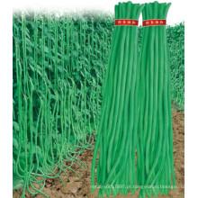 HBE04 sementes de feijão verde Anli OP em sementes de hortaliças