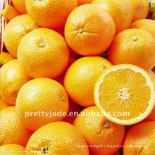 New season fresh Navel orange