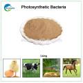 Proveedor de bacterias fotosintéticas de aditivos para piensos