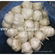 Pure White Garlic From Jinxiang Area