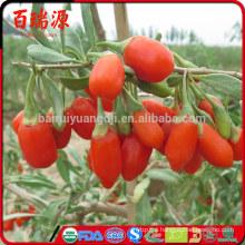Dove acquistare le bacche di goji goji berry natural goji raspberry