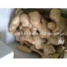 Full Dry Ginger (250g&up)