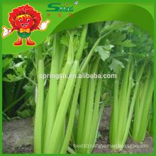 Types celery new crop price of celery