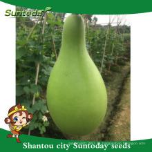 Suntoday gestión fácil semillas de calabaza semillas venta importación importación en empresas de agricultura semillas de gujarat (16001)