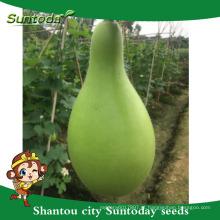 Suntoday fácil de gestão de cabaça sementes venda exportação de importação em empresas agrícolas gujarat sementes (16001)