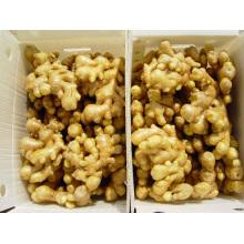 Professional Exporter of Fresh Ginger (100-250g)